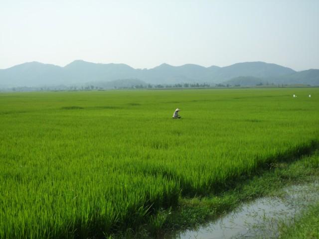 vietnam_phongna_crops