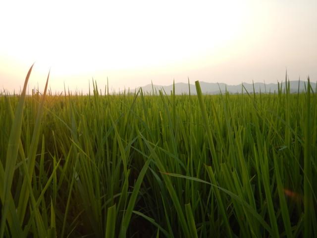 vietnam_phongna_landscape